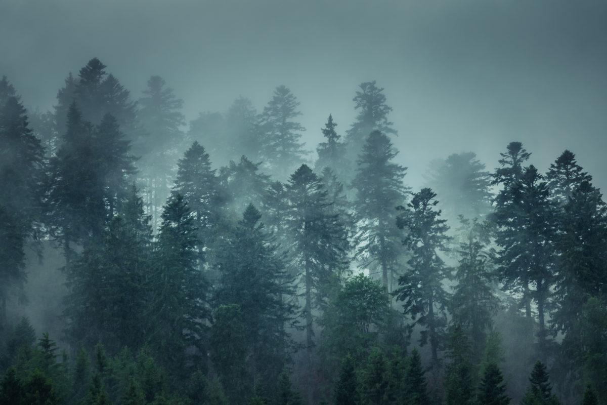 Blick auf die wolkenverhangenen Tannen des Schwarzwalds