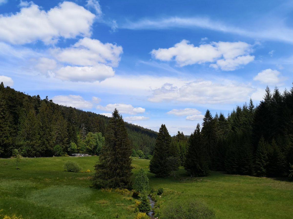 Bäume und Wiesen im Eyachtal